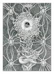 Neural I