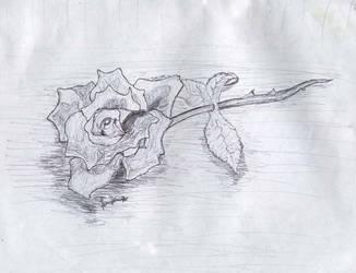 rose sketch- mastermindg by mastermindg