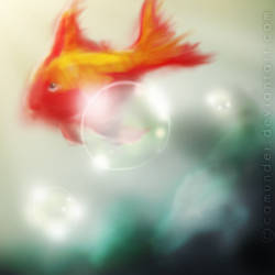 red fish and the bubble