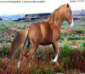 HEE Horse Avi