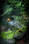 Yellow-banded Poison Dart Frog by Vitskog