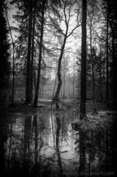 December Silence by Vitskog