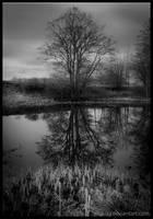Riverside by Vitskog