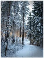 The Road by Vitskog
