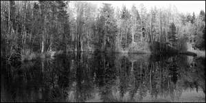 The Forest by Vitskog