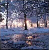 Vit Skog