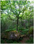 Oak Forest by Vitskog