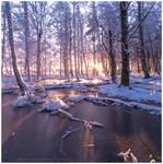 Winter Forest by Vitskog