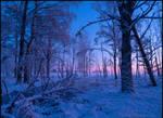 Winter Forest IV by Vitskog