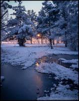 Winter Forest V