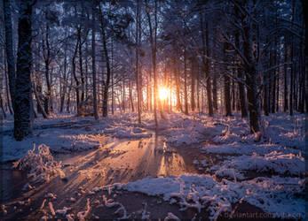 Frozen forest