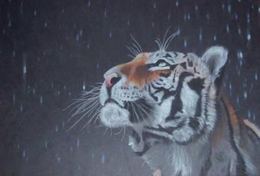 Tiger in the rain by mehipnotizas