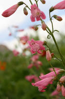 Close up Pink Flowers by DoggyArt