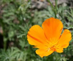 Orange Flower In a Corner by DoggyArt