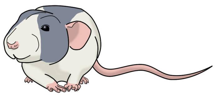 Rattie Art