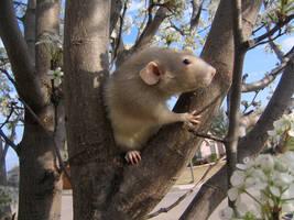 Spring and Rats Series - Baxil by Kitzira