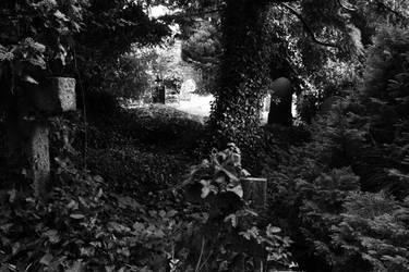 Ivy Graveyard by ILikeToStepOnCracks