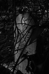 Overgrown Headstone by ILikeToStepOnCracks