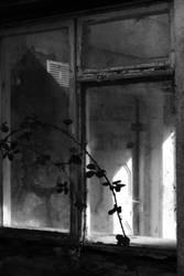 Window Thorn by ILikeToStepOnCracks