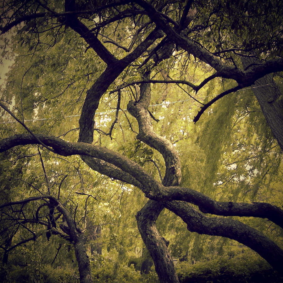 nested.root by sarah-marley