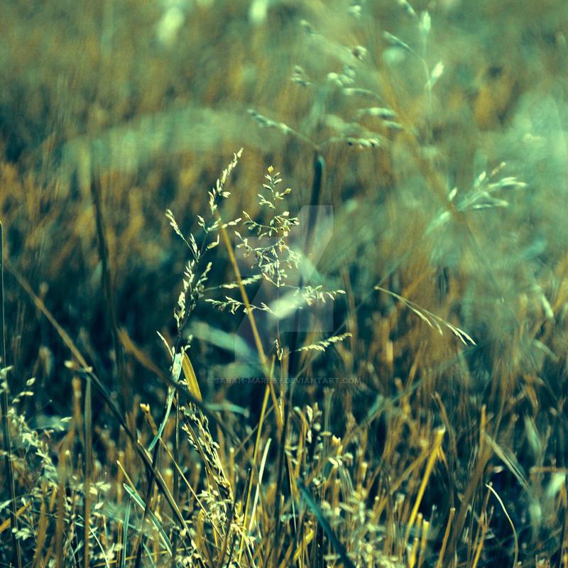 a.whisper by sarah-marley