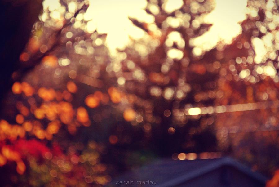 autumn.shade by sarah-marley