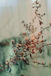 seasonal.change by sarah-marley