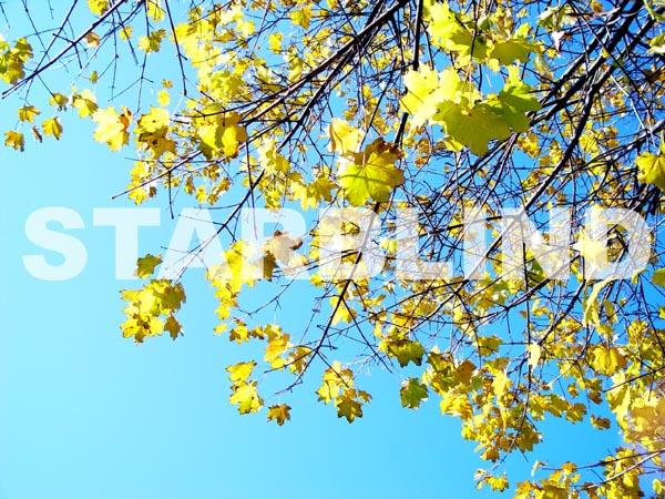 Starblind Autumn 2002