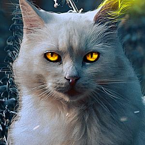 SaFram's Profile Picture