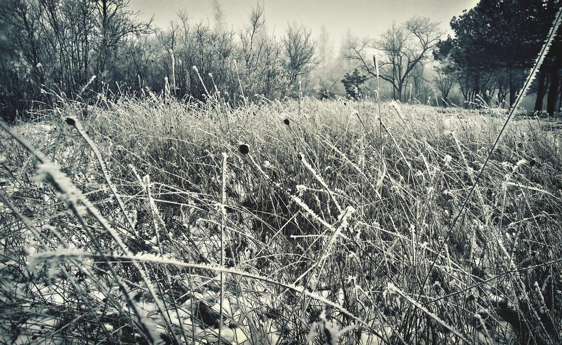 Winter grass by SilverArtMax ...