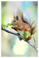 YOUNG SQUIRREL by proac150