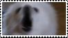 gabe the dog by odidos