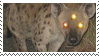 hyena stamp by odidos