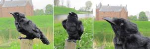 Raven bag to match the Raven dress by Phantasma-Studio