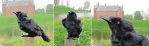 Raven bag to match the Raven dress