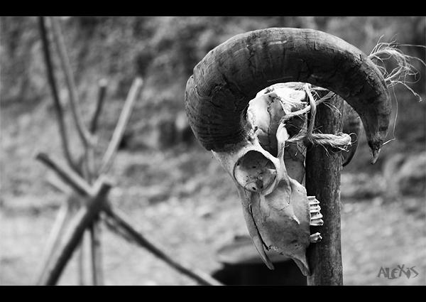 http://fc01.deviantart.net/fs70/f/2010/200/d/a/Skull_by_Jaimeca_overblog.jpg
