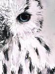 Snow Bark Owl