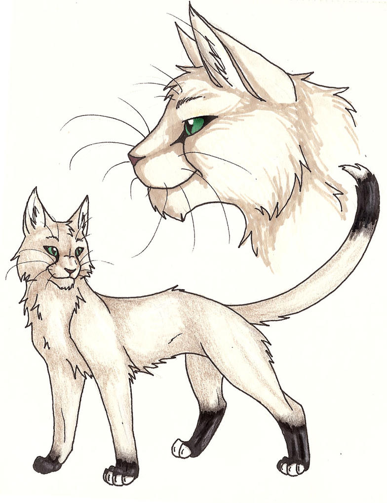 Warrior Cats Virtual World Online Game
