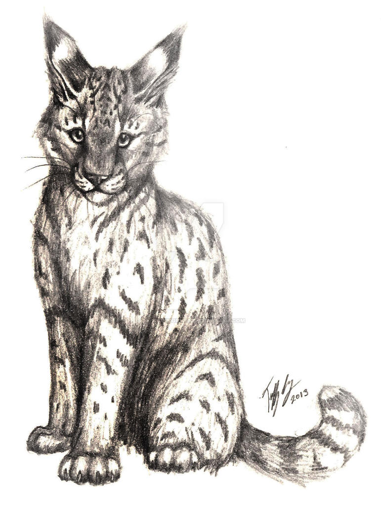Wild Cat Pencil Drawing by CaptainMorwen