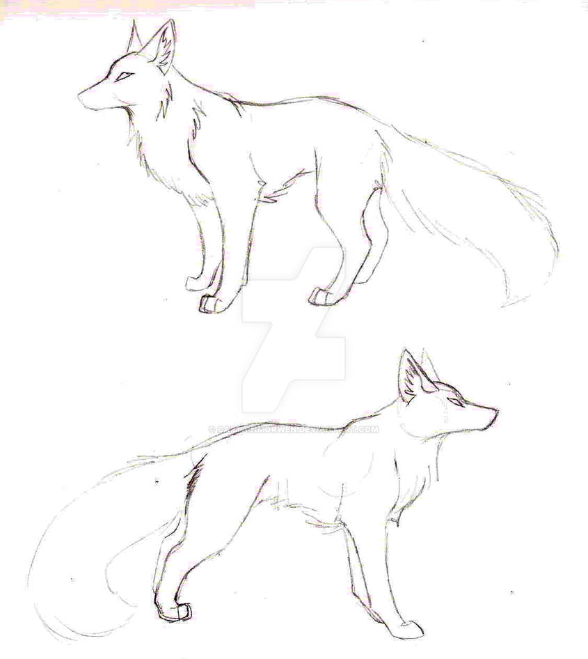 Fox Sketches by CaptainMorwen