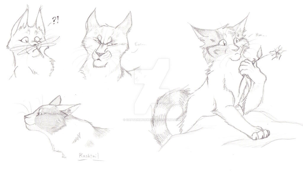 Warriors Sketches by CaptainMorwen