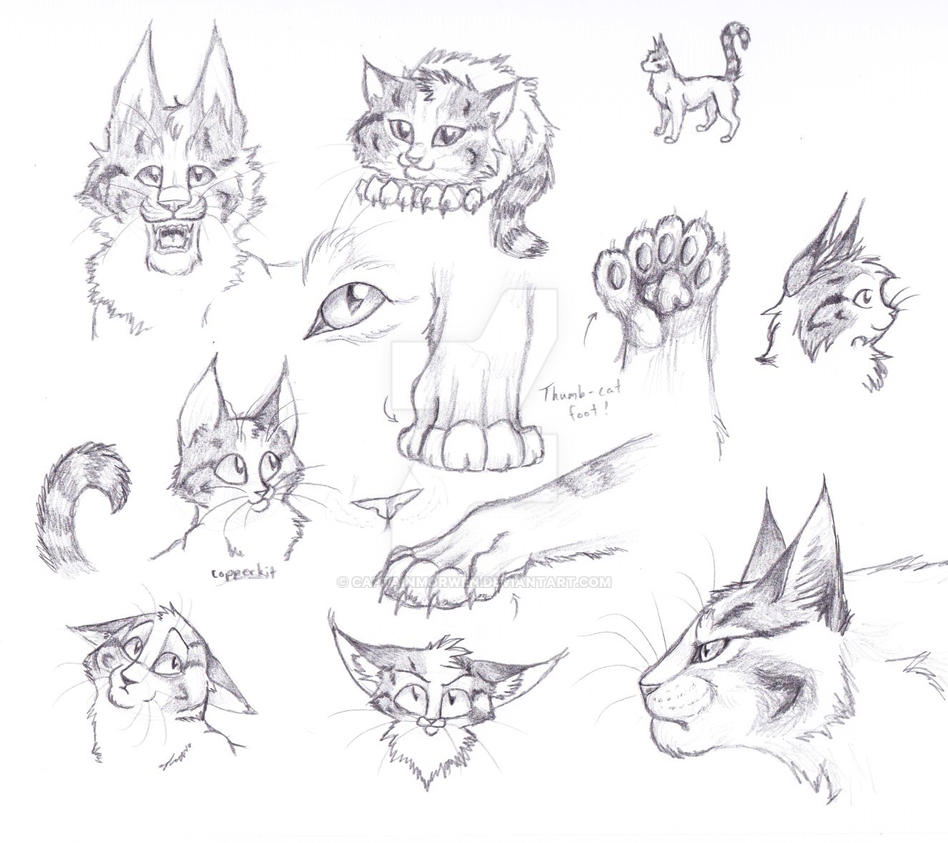 Copperpaw - Sketches by CaptainMorwen