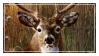 .:Stamp:. Deer Stamp by Jiraychi