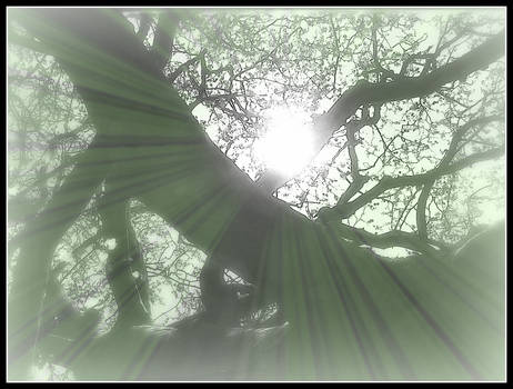Let There be light passing through the branches