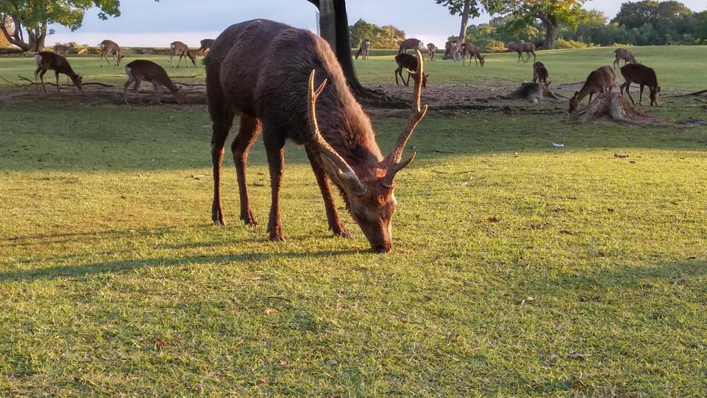 Deer park, Nara by moranc12