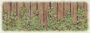 Ivy on Woodplanks