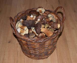 Mushrooms by Sharandra