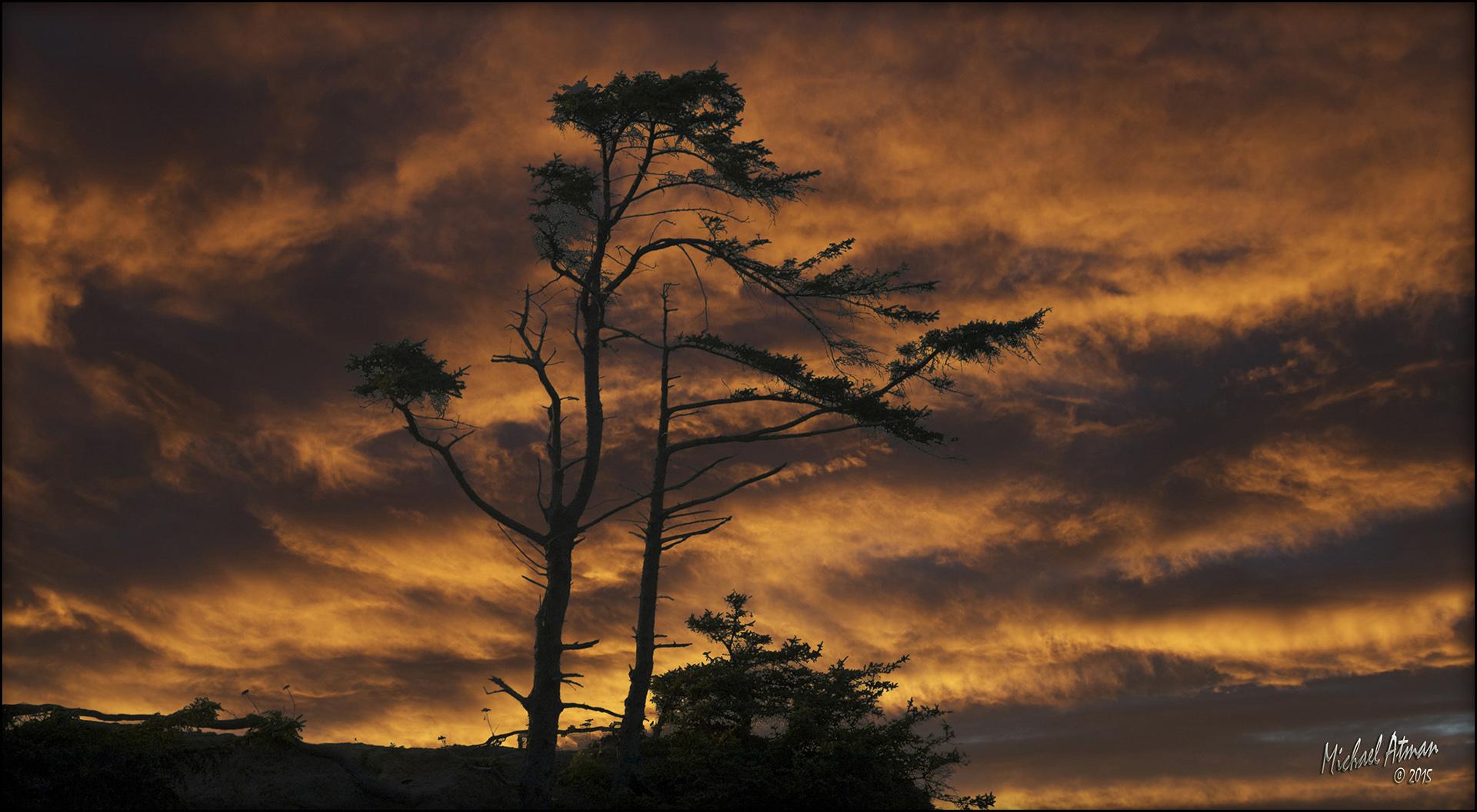 Tree At Sunset by MichaelAtman