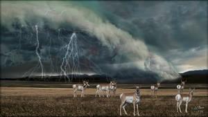 Summer Storm by MichaelAtman