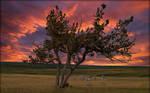 A Tree on the Prairie